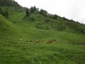 Découverte du Val de Courre au Mont-Dore