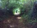 Un chemin creux