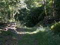 Bois du Névet par le sentier équestre