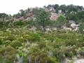 Végétation du sud de la Corse