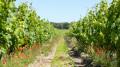Une boucle au coeur des Vignes de Bourgueil